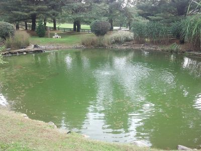 Spring pond cleaning pond startups water feature for Koi pond maintenance near me